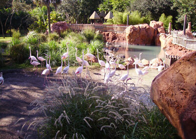 Flamencos en Disney Animal Kingdom Lodge